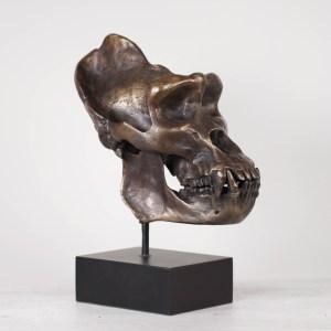 Bronze Gorilla Skull Edition III