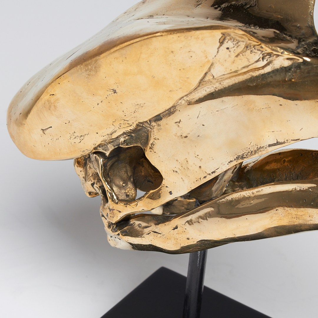 Great Hornbill Skull Sooka Interior