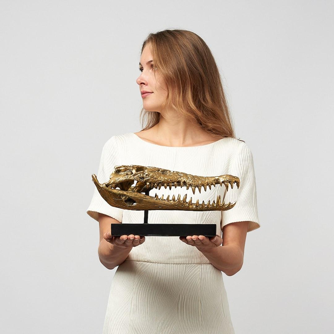 37cm saltwater crocodile skull medium