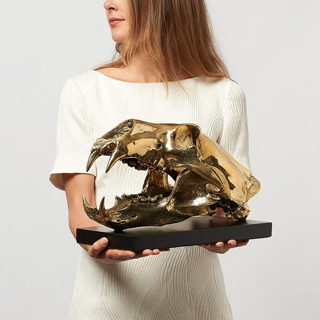 polar bear skull in polished bronze