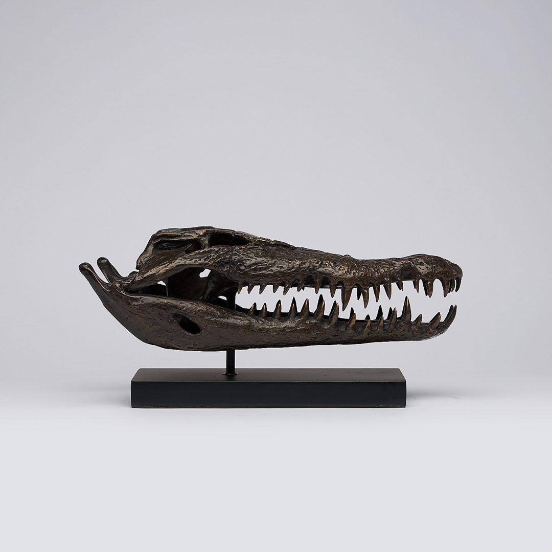 37cm bronze saltwater crocodile skull