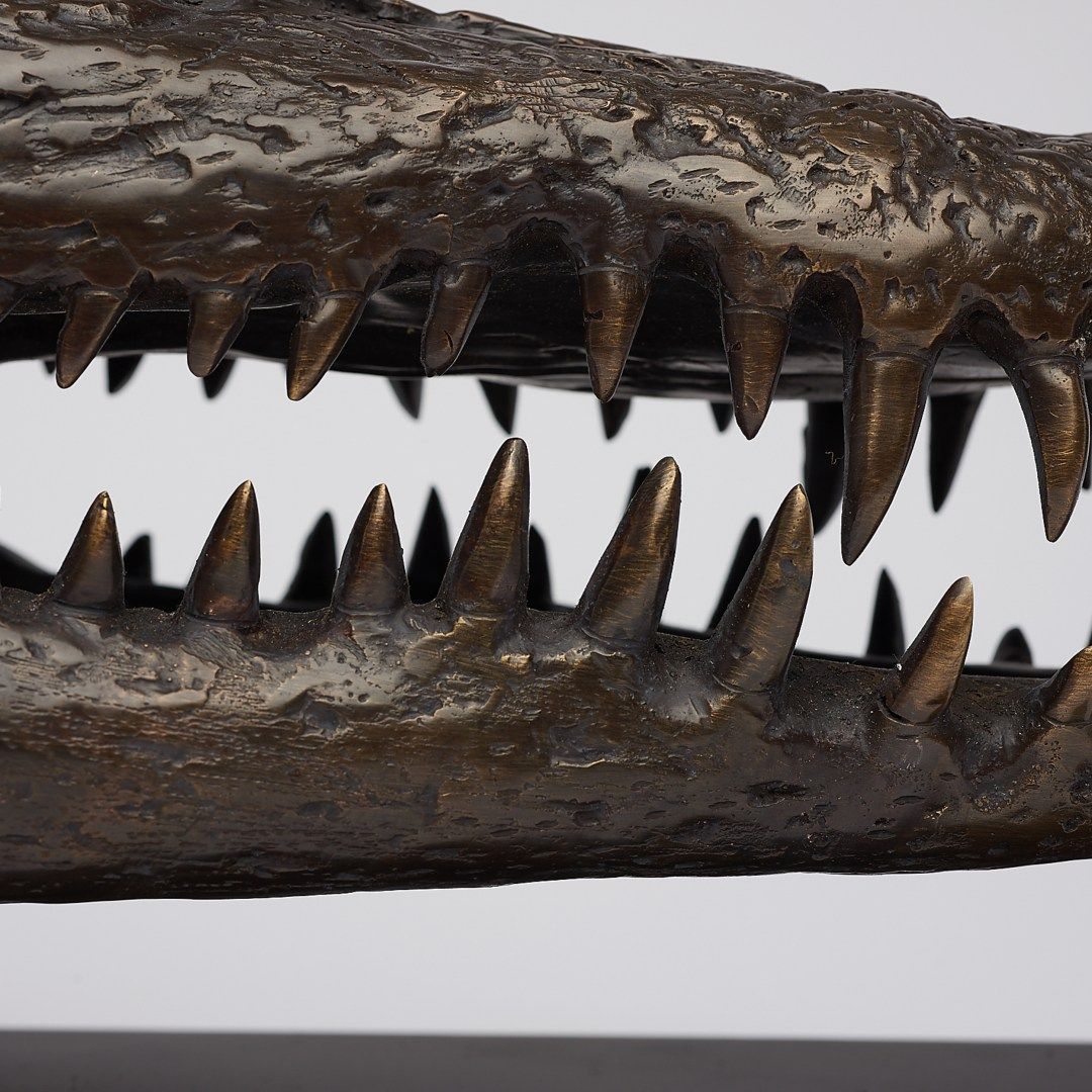 medium bronze saltwater crocodile skull