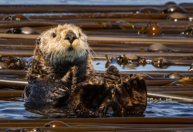 Marine Life Tours