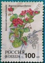 Sello Rusia 1993 Begonia 100 ₽