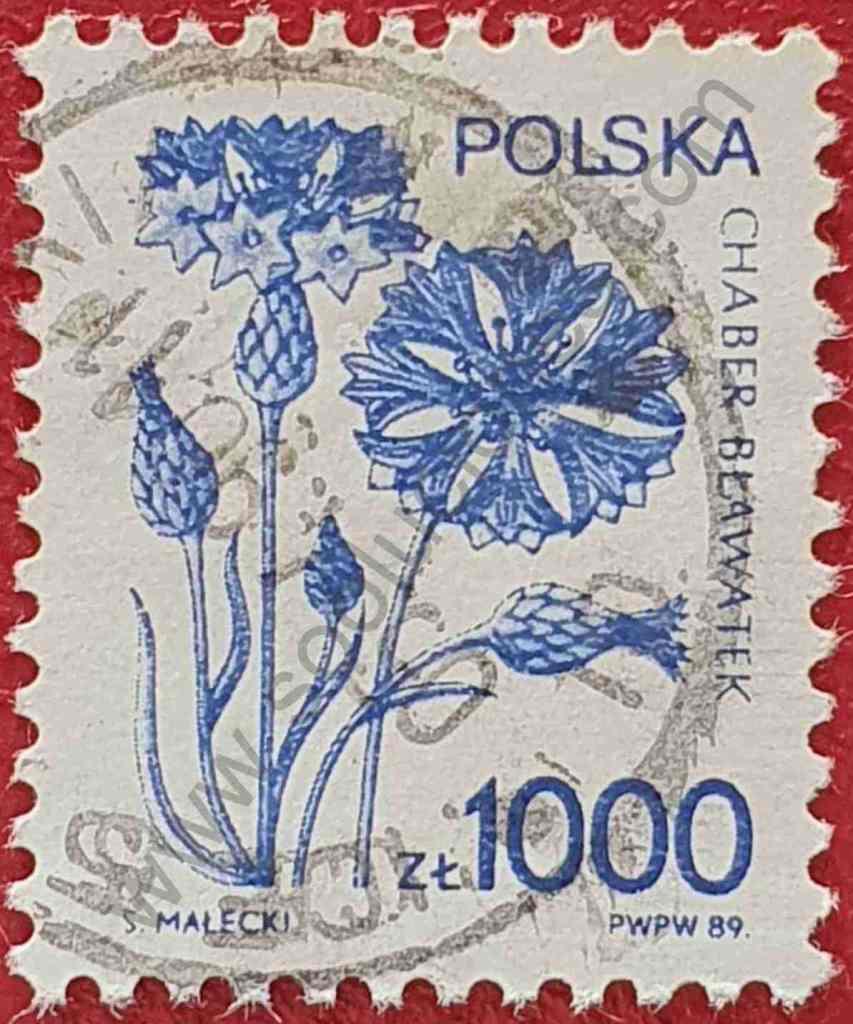 Sello Flor Centaurea cyanus - Polonia 1989