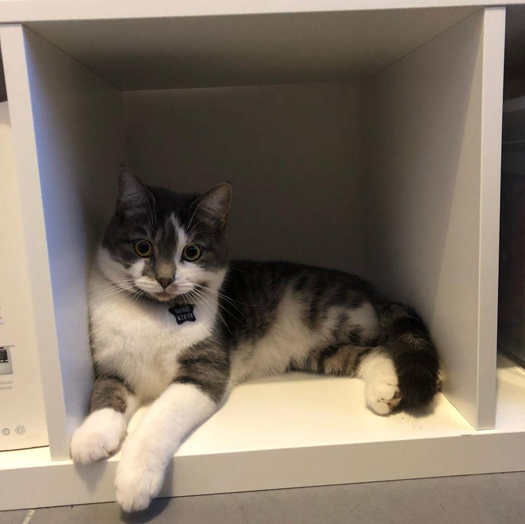 Pixel dans une étagère