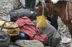 cette mule se restore au camp de base