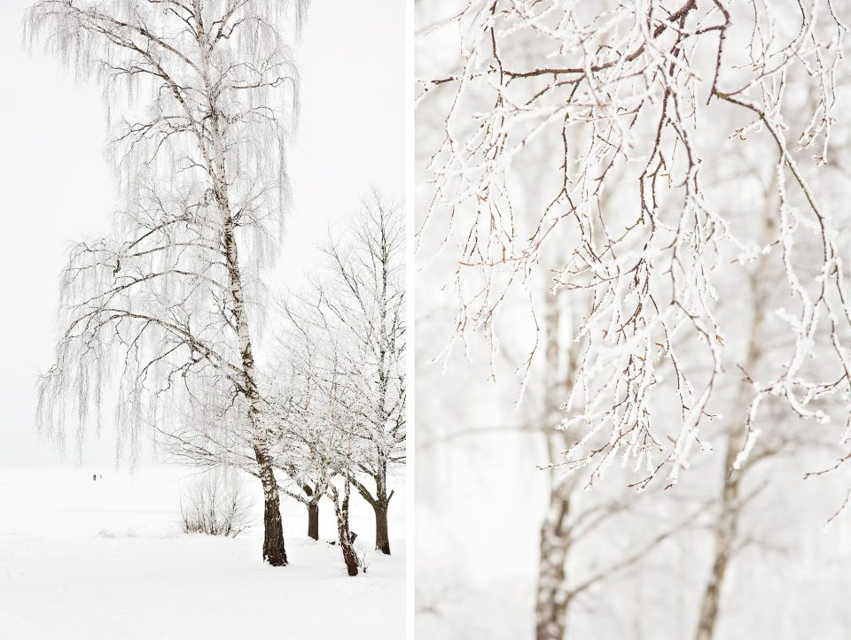 Snowcovered-branches