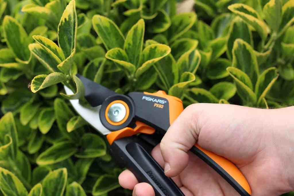 Gardening 101: Developing Your Green Fingers