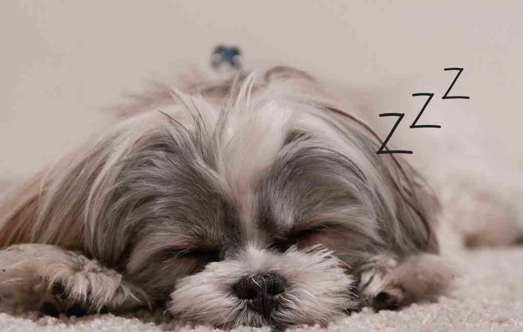 Sleep Quality: Ways To Improve Your Sleep