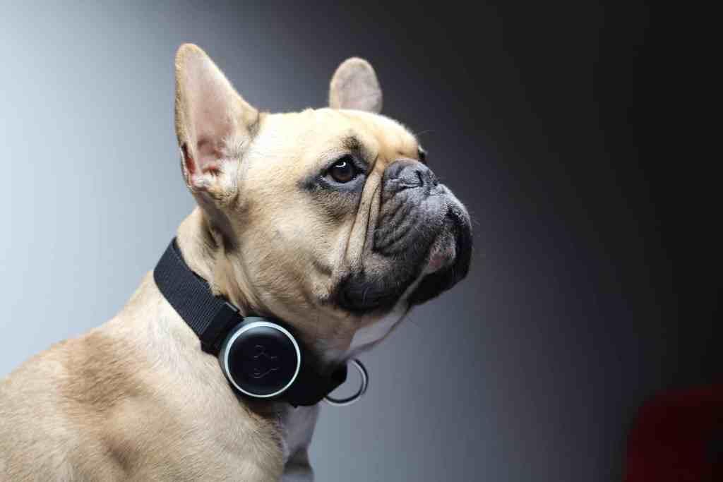 Mishiko Dog Collar GPS & Activity Tracker for Dogs