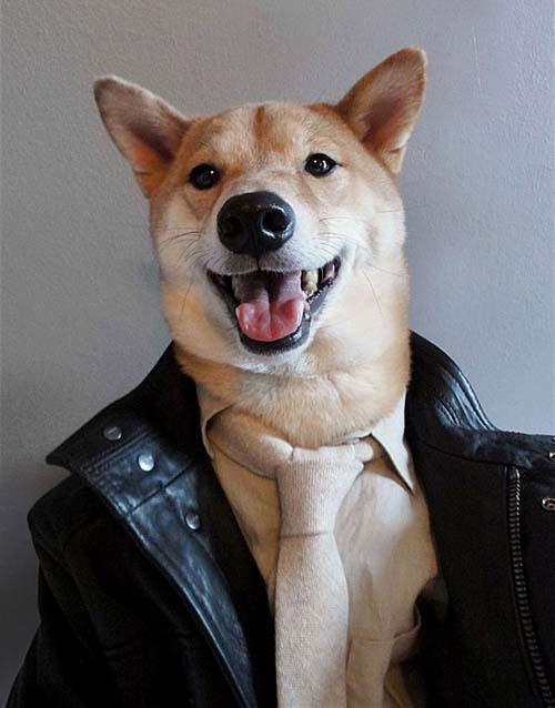 perro_mejor_vestido_5