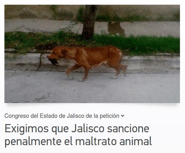 change animales