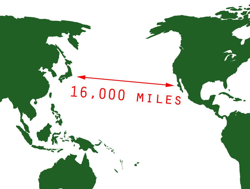 la tortuga lad nace en el caribe y despus viaja a las aguas del norte del continente americano para alimentarse de medusas
