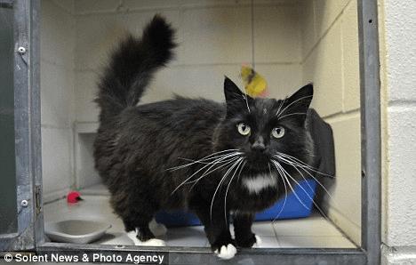 El gato que sobrevivió al horno de microondas