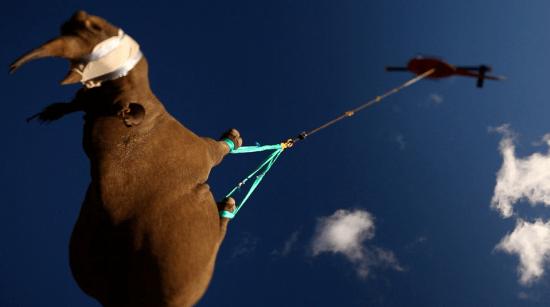 Y con ustedes... ¡rinocerontes voladores!