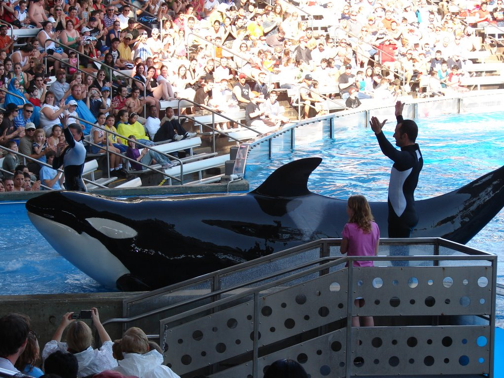 Ballenas demandan a Sea World por esclavitud