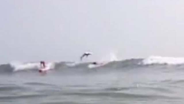Un tiburón salta sobre surfistas