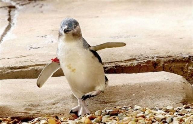 Y en la nota idiota del día....Tres hombres borrachos roban pingüino