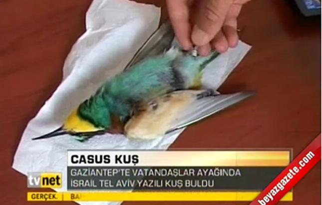 Turcos acusan a pájaro de espionaje