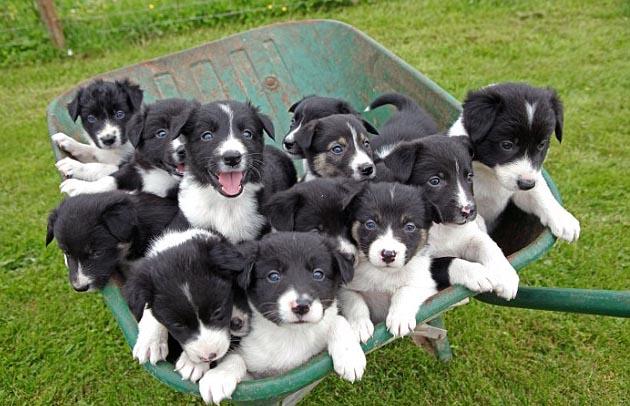 Ternuringaaaa cachorril!!!!