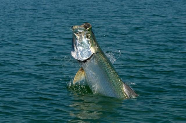 Pez gigante trata de comerse a un pescador