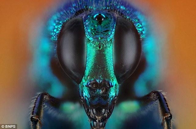 Galería: Esta es la belleza oculta del mundo de los insectos