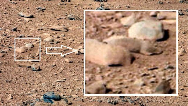 """Curiosity descubre una """"rata"""" en Marte"""