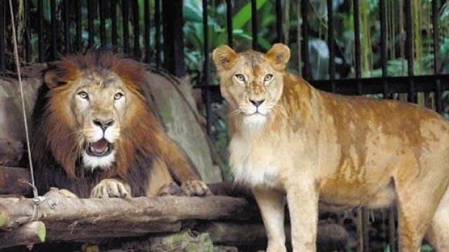 Costa Rica se queda sin zoológicos