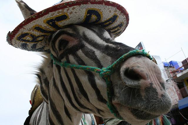 Los Burro-cebras podrían ser patrimonio de Baja California Norte