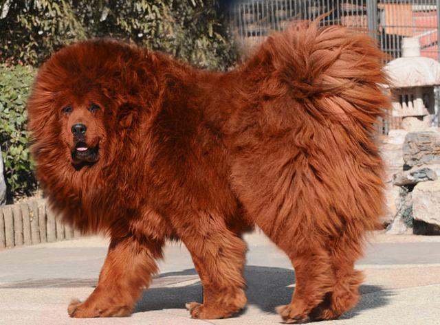 El zoológico fake: hacía pasar a perros como si fueran leones