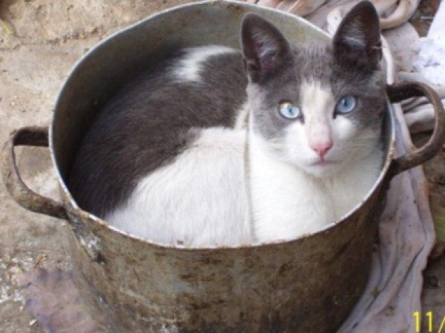 En Perú comen gato... y alguien ya se quejó (aparte de los gatos)