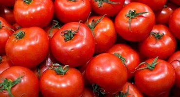 Estados Unidos suspende acuerdo y activa aranceles a tomate mexicano