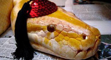 Serpientes con sombrero: la nueva plaga de internet