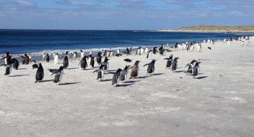 Sea Lion Island:  Pingüinos, Leones Marinos y Orcas en medio de la nada