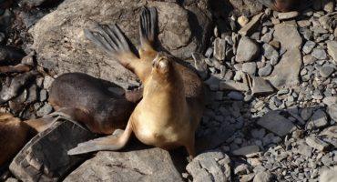 Islas Falkland: La vida en una isla desierta