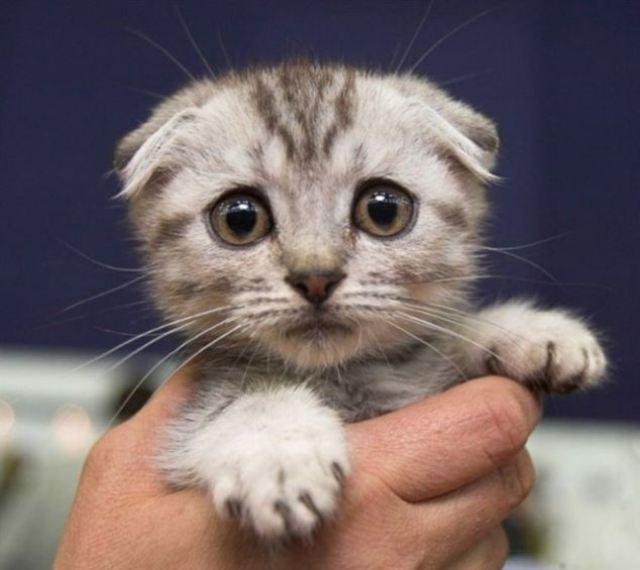 Galería: Los gatos más tristes de la red