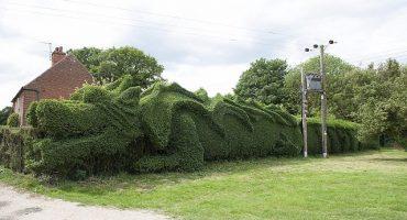 Conoce al dragón que vive en un jardín