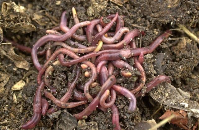 WTF!?!?!? Horribles gusanos que parecen alienígenas