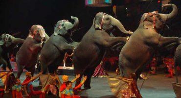 ¡Ya no podrán tener animales en los circos del DF!