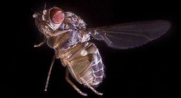 6 cosas que no sabías de las moscas por las cuales no deberías odiarlas
