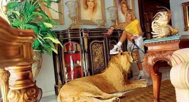 Con especies disecadas, esposa de diputado que promovió ley contra animales en circo