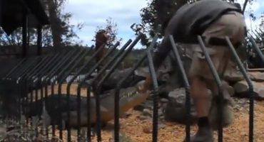 Video: Ouch!!! Cocodrilo ataca a su cuidador en Australia