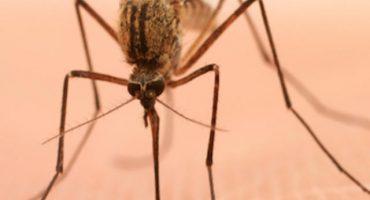 ¿Por qué nos pican los mosquitos? (y cómo combatirlos)