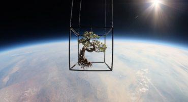 Esto pasa cuando llevas una planta al espacio