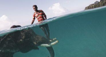 La isla donde puedes nadar con elefantes
