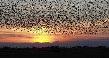 Las 12 migraciones animales más impresionantes