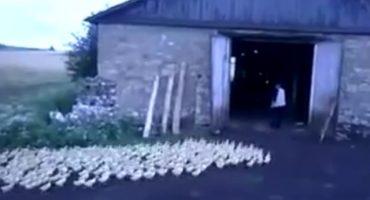 Video: El señor de los patos