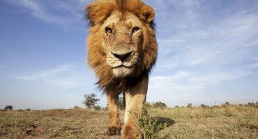En los últimos 40 años, la Tierra perdió el 50% de su vida salvaje: WWF