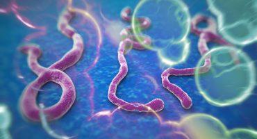 Todo lo que necesitas saber sobre el ébola